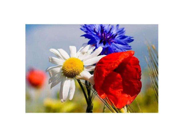 3-flowers-FL-
