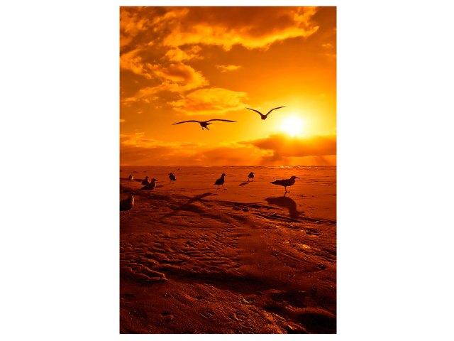 birds-FL