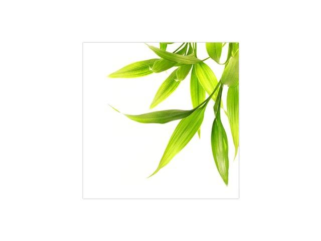 green-decor-FL