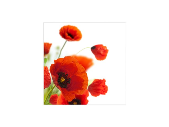 poppies-FL