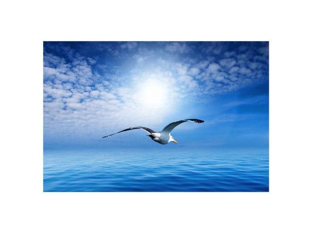 seagull-FL