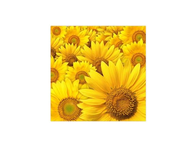 sunflower-FL